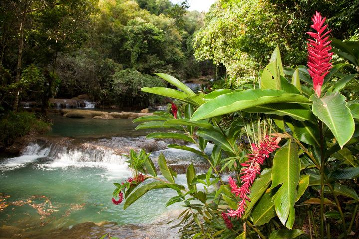 Black River Safari and YS Falls Combo from Montego Bay